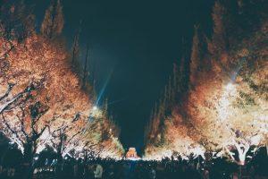 外苑前のイチョウの木ライトアップ
