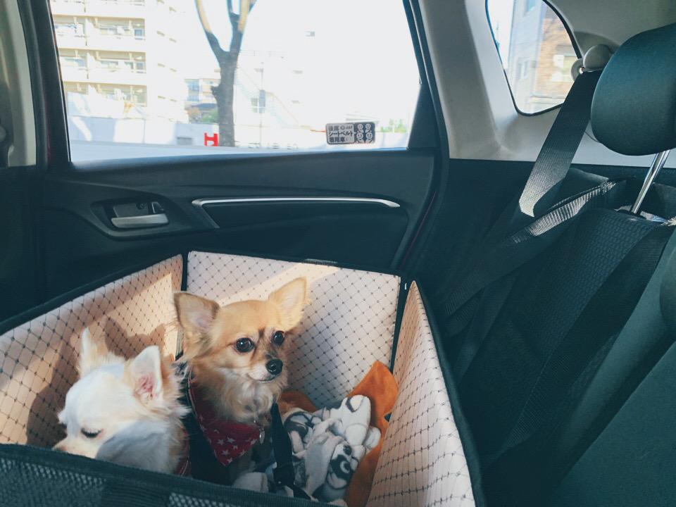 ドライブボックス