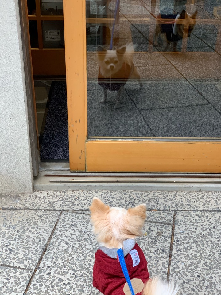 ガラスに映る犬のフリー写真素材