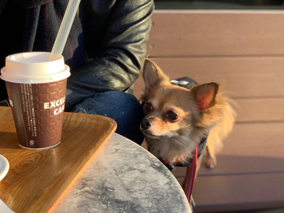犬とカフェのフリー写真素材