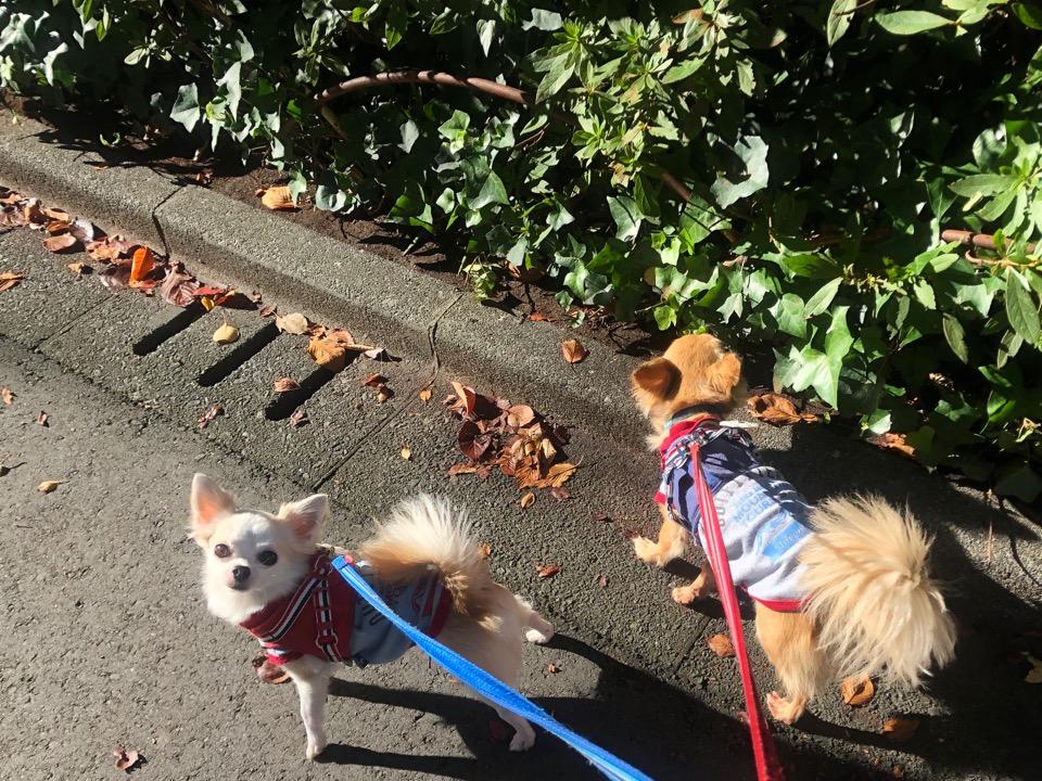 散歩する犬のフリー写真素材