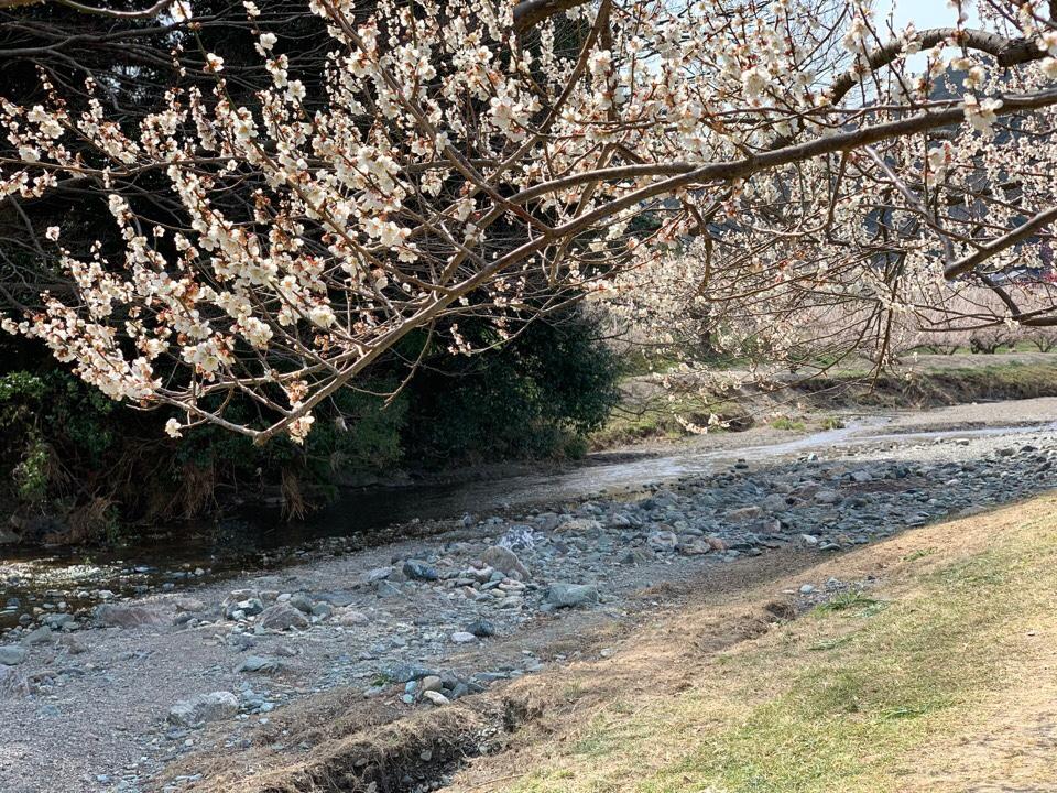 梅林の景色のフリー写真素材